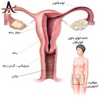 دستگاه تولیدمثل زن زیست یازدهم