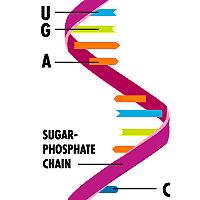 رنا RNA دوازدهم