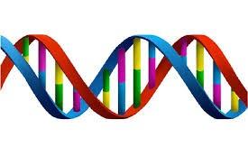 نحوه تشکیل رشته پلی نوکلئوتیدی زیست دوازدهم