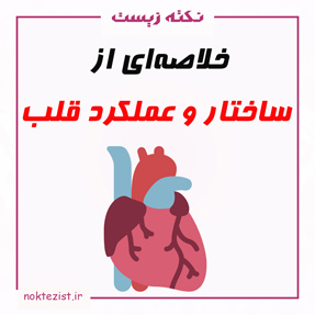 ساختار و عملکرد قلب زیست دهم خلاصه نکته زیست