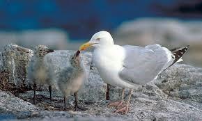 خلاصه فصل رفتارشناسی جانوران زیست دوازدهم