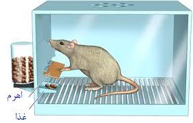 خلاصه درس رفتارشناسی جانوران زیست دوازدهم