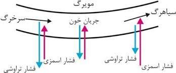 ساختار رگ های خونی زیست شناسی دهم